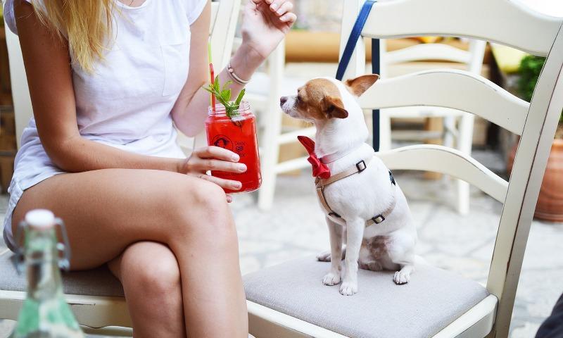 dog-delhi
